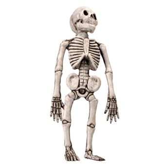 Imagen de Esqueleto