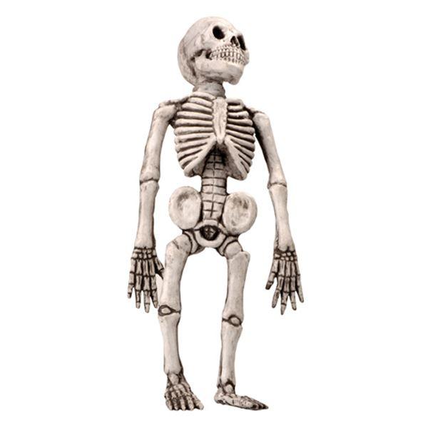 Picture of Esqueleto