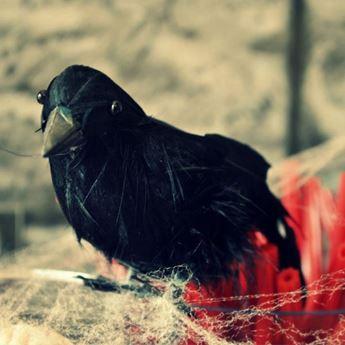 Imagens de Cuervo pequeño